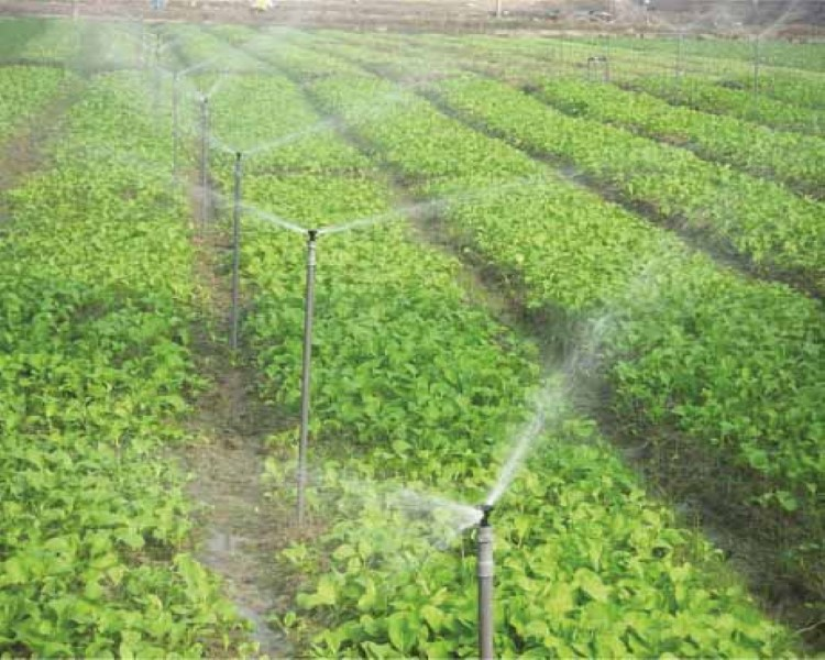 Water Conservation and Productivity Enhancement through High Efficiency Irrigation Systems Project